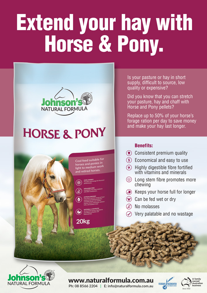 horsepony-1000px